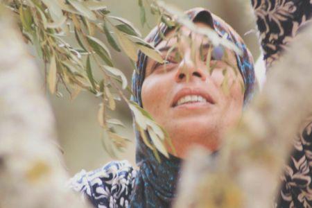 Olive harvest general  (5)-1200.jpg