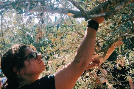 Olive harvest general  (6).jpg