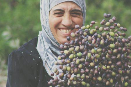 Olive harvest general  (2)-1200.jpg